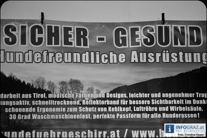 Internationale Rassehundeschau in der Grazer Messe - 059